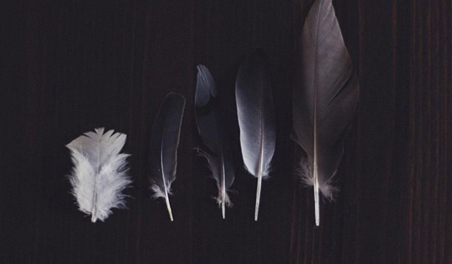 The Story of the Feather